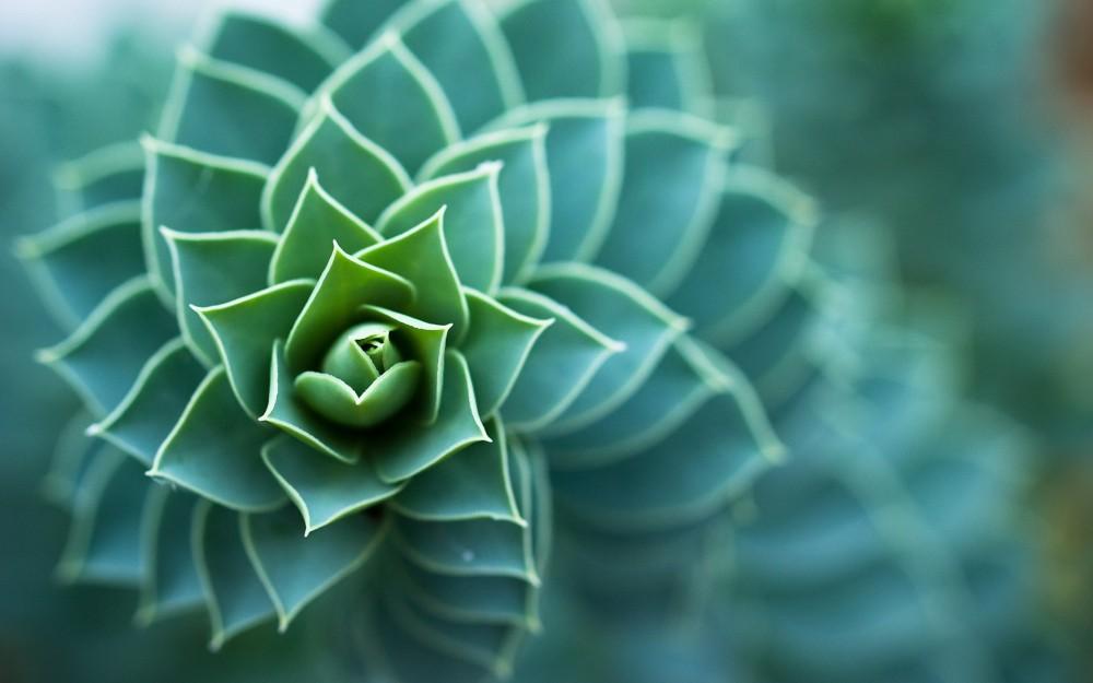 spiralplant.jpg